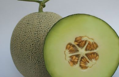 Melon Clara