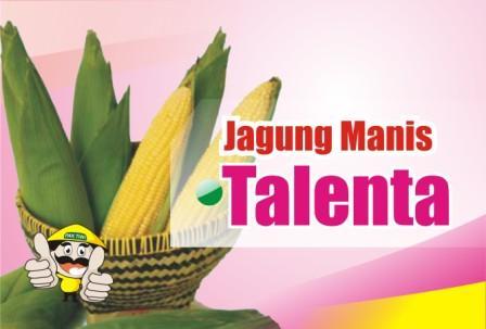 Jagung Manis Talenta