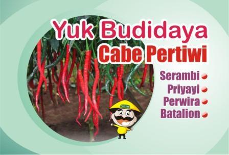 Budidaya Cabe Pertiwi
