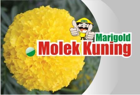 Marigold Molek Kuning
