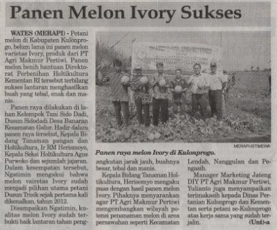 Panen Melon Ivory Sukses