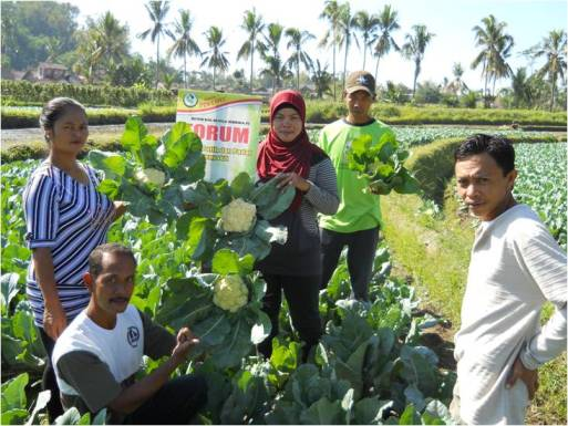 Kembang Kol Forum di Muntilan, Magelang