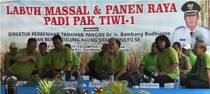 Padi Pak Tiwi-1 Lebih Hemat Pupuk dan Nasi Pulen