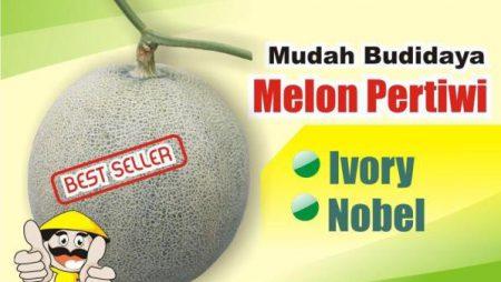 Budidaya Melon Pertiwi