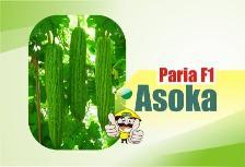 Paria Asoka