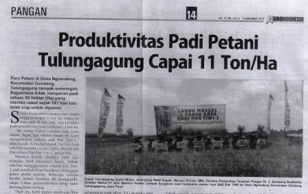 Produktivitas Padi Tulung Agung Capai 11 Ton/Ha