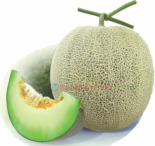 Melon Pertiwi