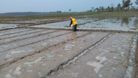 Penyebab Kerusakan Tanah Sawah