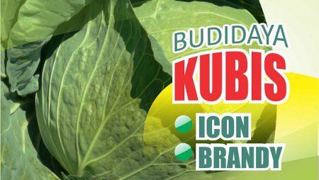 Budidaya Kubis Pertiwi