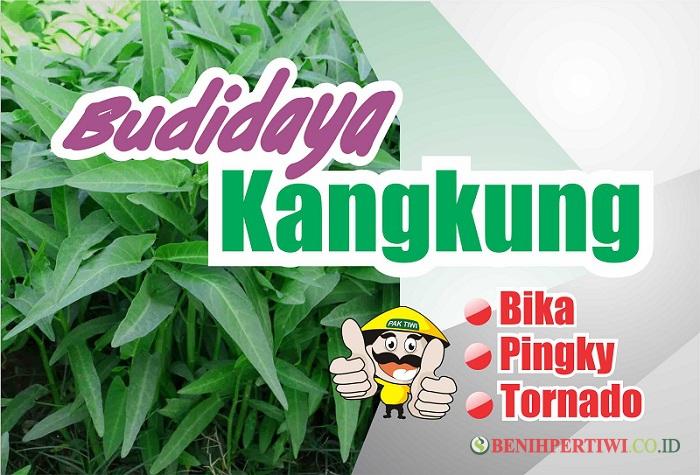 Budidaya Kangkung