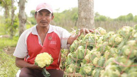 Bunga Kol Pertiwi, Cocok untuk Dataran Rendah dan Musim Hujan