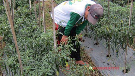 Meningkatkan Daya Tawar Petani