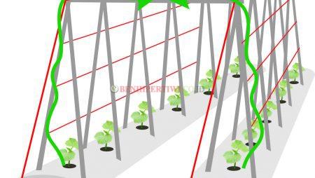 Aneka Bentuk Lanjaran untuk Sayuran Merambat