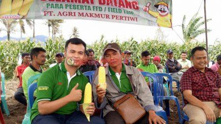 Jagung Manis Paragon, Sukses Merebut Hati Petani