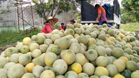 Melon Pertiwi Anvi Memang Juara Manisnya, Juara Hebatnya