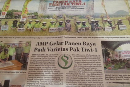 AMP Gelar Panen Raya Padi Varietas Pak Tiwi-1