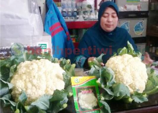 Cocok! Kembang Kol Forum untuk Pasar Supermarket