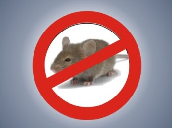 Tikus dan Pengendaliannya
