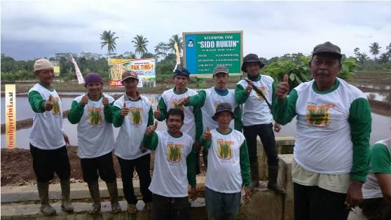 Tanam Padi Pak Tiwi-1 di Tanggamus, Lampung