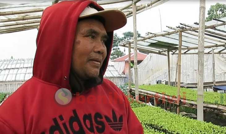 Bunga Kol Forum di Lapak Persemaian Sayur Parongpong, Jawa Barat